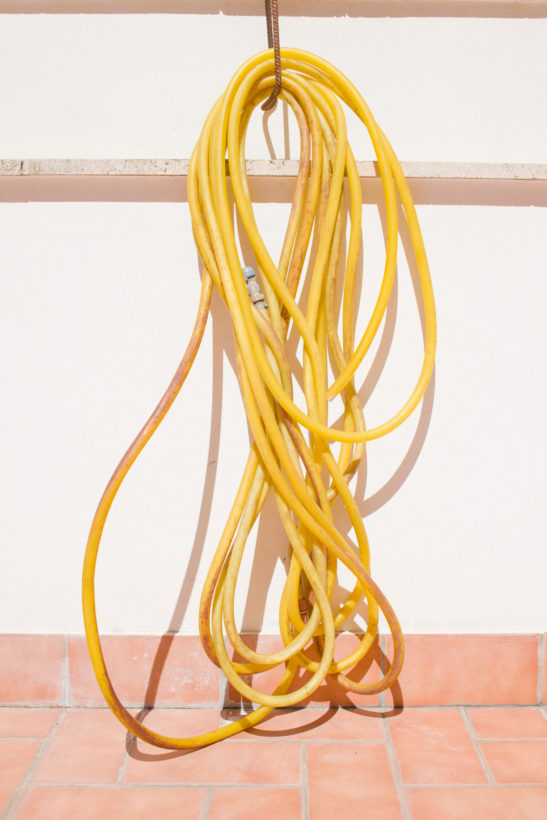 photograph of a neatly rolled yellow watering hose on a sunny day
